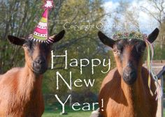 Happy New Year Homemade Greeting Card Goats by overthefenceart, $5.00