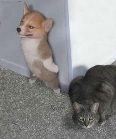 funny animals 3 - Funny Animal Quotes - - If my corgi Ryder had a dream where he was an international spy I imagine it would look like this The post funny animals 3 appeared first on Gag Dad. Funny Animal Jokes, Cute Funny Animals, Funny Animal Pictures, Animal Memes, Cute Baby Animals, Funny Cute, Funny Humor, Corgi Pictures, Dog Humor