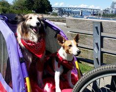 Dogs on Bikes going for Picnics