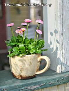#pottery #planters #pots #containers  Getting An Early Start on Planting Flowers.... English Daisy