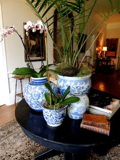 Blue and White is always dramatic and gorgeous! Just added some to our entryway and loving it!