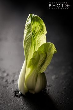 Bok Choy by Franck Hamel Fruit And Veg, Fruits And Veggies, Dark Food Photography, Photography Ideas, Vegetables Photography, Edible Food, Cooking Ingredients, Food Design, Raw Food Recipes
