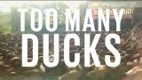 Watch jaw-dropping duck stampede - CNN.com Video