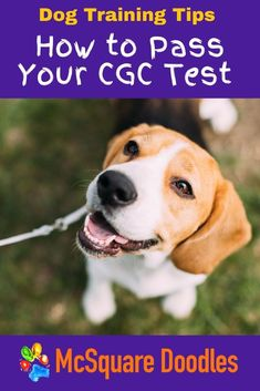 Is your dog a good boy or good girl? Consider taking the Canine Good Citizen Test! Learn more about the test, the CGC program, and specific training tips for each of the ten CGC tasks that prove your dog is the best boy or girl. Therapy Dog Training, Dog Training Books, Therapy Dogs, Dog Training Tips, Dog Status, Dog Fails, Positive Dog Training, Australian Labradoodle, Good Citizen