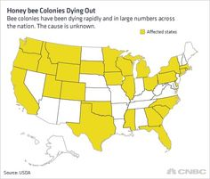 Honey Bee Colonies Dying Out. Bee colonies have been dying rapidly and in large numbers across the nation. The cause is unknown.