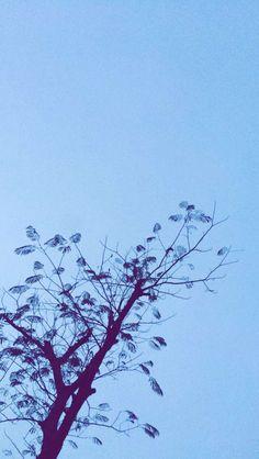 #Arbol #Cielo #Paisajes