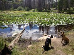 Norah and her best friend Mosley at Lily Pad Lake
