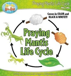 1000 Images About Life Cycles Science On Pinterest
