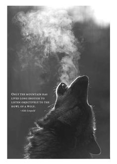 Aldo Leopold - Only the mountain has lived long enough to listen objectively to the wolf.