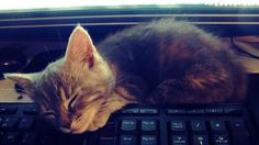 He enjoys napping on the keyboard. pic.twitter.com/o8pgf47i0W