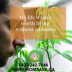 Tagged with buyweedonline, marijuanaonline, weedislife, marijuanasask, cannabissask; My life wasn't worth living without cannabis Buy Weed Online, Trending Memes, Cannabis, Funny Jokes, My Life, Mom, Husky Jokes, Ganja, Jokes