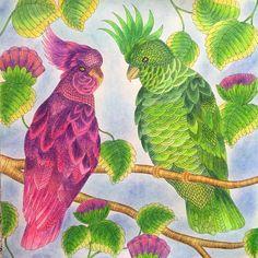 Мне нравится зелёный, а вам какой?😉 #миллимаротта #миллимароттавстранечудес #рисунок #раскраска #раскраскаантистресс #раскраскадлявзрослых #раскраски #рисование #рисуюкарандашом #рисуюкакмогу #рисуюкакумею #джоаннабэсфорд #джоаннабасфорд #иллюстрация #карандаш #карандаши #coloring #coloringbook #coloringbooks #coloringpencil #colorindolivrostop #coloringantistress #johannabasford #johanabasford #tropicalworld #kohinoor #кохинор #milliemarotta #попугай #попугаи