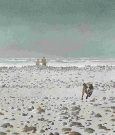 """Winter Beach,"" Tom Forrestall, egg tempera on gessoed panel, x Elliott Louis Gallery. Canadian Painters, Canadian Artists, Newfoundland Island, Winter Beach, Magic Realism, Beach Artwork, Artwork Display, Prince Edward Island, Contemporary Paintings"