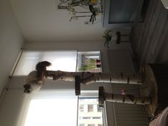 Home made cat tree! Love it!