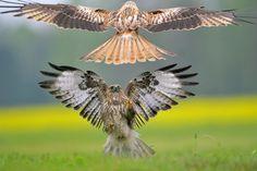 Atak - Robert Babisz Photography