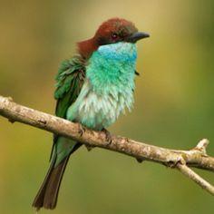 gorgeous bird!!!