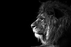 Lion of Zion!