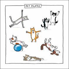 Pet Pilates