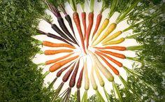 Could Carrots Be the Carbon Fiber of the Future? - http://modernfarmer.com/2014/05/orange-new-black/?utm_source=PN&utm_medium=Pinterest&utm_campaign=SNAP%2Bfrom%2BModern+Farmer