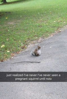 Just in case you guys have never seen a pregnant squirrel. Funny Animal Photos, Animal Pictures, Cute Pictures, Dog Pictures, Squirrel Pictures, Baby Animals, Funny Animals, Cute Animals, Jurrassic Park