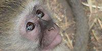Vervet Monkey Foundation - Photo Galleries
