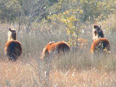 Outer Banks (Nags Head), North Carolina (wild horses)!