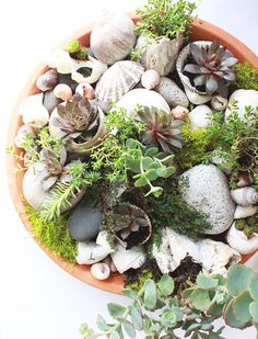 alisaburke: sea shell garden