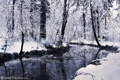 Winter pond by Jorge Maia, via 500px