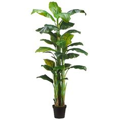 7'6' Banana Silk Palm Tree w/Pot -Green (pack of 2) * Want additional info? Click on the image.
