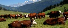 Responsible Living •~• Natural Grocers To Farmers: Let Cows Graze