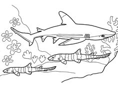 desenho pintar tubarão