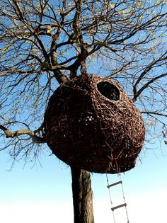 some of the weaver's nests function as proper tree houses