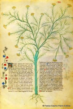 Your virtual eye on illuminated manuscripts, rare books, and the stories behind them. Voynich Manuscript, Medieval Manuscript, Illuminated Manuscript, Botanical Illustration, Botanical Prints, 11th Century, Gravure, Science And Nature, Botany