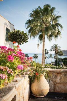 Cyprus: A culinary adventure around the island, cyprus, culinary travel Columbia, Cyprus, Beach Resorts, Travel Around, Island, Adventure, Plants, Paradise, Viajes