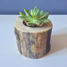 Succulent / flowering plants / succulent plants / by BearHomeShop