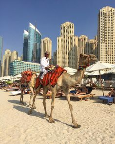 Camel on the beach 🐪 🇦🇪 ☀️