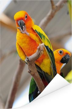 Bird Quotes, Close Up, Parrot, Cute, Prints, Animals, Products, Parrots, Birds