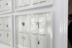 Insectarium illustrations.   'The Paint Evolution' by CuldeSac™ for Valentine. @PRexperience