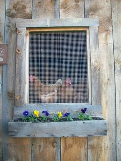 wooden window box under chicken coop window- no link Future Farms, Chicken Lady, Chicken Chick, Chickens And Roosters, Pet Chickens, Rabbits, Hen House, Farms Living, Down On The Farm