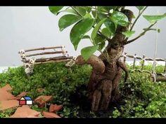 Cómo hacer un jardín en miniatura paso a paso | Plantas