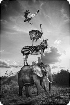 Thomas Subtil - Hakuna Matata - Safari Kenya 8