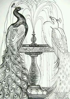 X Pen and Ink Drawing on Smooth Strathmore Bristol of two Peacocks getting refreshed in a fountain. Blue and White Peacocks Peacock Drawing, Peacock Painting, Peacock Art, Peacock Colors, Peacock Feathers, Peacock Coloring Pages, Coloring Book Pages, Pfau Tattoo, White Peacock