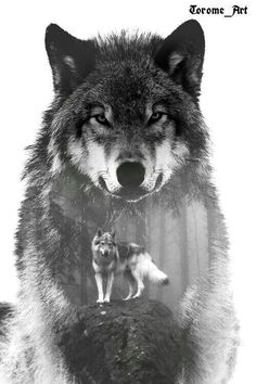Majestic wolf art - Sister and Brother Wolf Images, Wolf Photos, Wolf Pictures, Wolf Sleeve, Wolf Tattoo Sleeve, Tattoo Wolf, Wolf Tattoo Design, Beautiful Wolves, Most Beautiful Animals