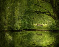 Bench in a Green Glade... that's the kind of atmosphere that trees make!