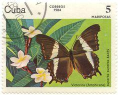 Butterfly Stamp Us Postage Stamps | ID: 002009 Superba superba Bates - Victorina (Amphirene)