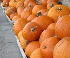 Several good ideas here - hide toys in hay, flick seeds into a basket, roll pumpkins with a broom, canning lids and pumpkin stem ring toss or hula hoop and pumpkin ring toss