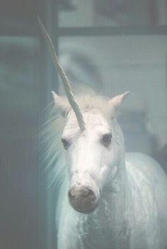 #Unicornio #Magico #Tumblr