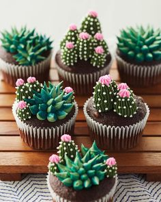 These succulent cupcakes are almost *too* cute to eat. 🌵� These succulent cupcakes are almost *too* cute to eat. 🌵� These succulent cupcakes are almost *too* cute to eat…. Cupcakes Succulents, Kaktus Cupcakes, Garden Cupcakes, Beautiful Cakes, Amazing Cakes, Blooming Succulents, Succulents Art, Succulents Wallpaper, Succulents Drawing