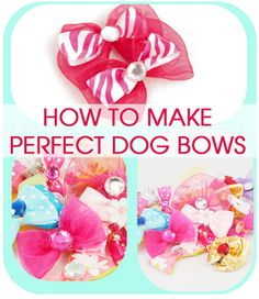 Perfect Dog Bows (Tip from a Professional Dog Groomer) |
