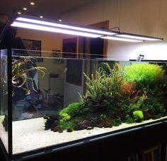 A large tank - Aquarium Aquarium Terrarium, Nano Aquarium, Aquarium Design, Saltwater Aquarium, Aquarium Fish Tank, Freshwater Aquarium, 125 Gallon Fish Tank, 125 Gallon Aquarium, Aquascaping